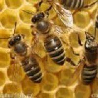 کارآفرینی پرورش و نگهداری زنبور عسل