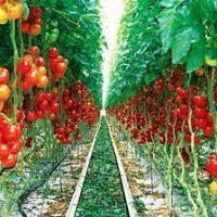 طرح کارآفرینی تولید محصولات خارج از فصل در گلخانه