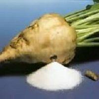 کارآموزی تولید شکر از نیشکر