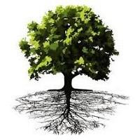 مقاله نقش ریشه و پایه های درختان میوه در سازگاری با عوامل
