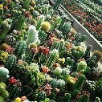 کارآفرینی پرورش گل و گیاهان زینتی قاصدک
